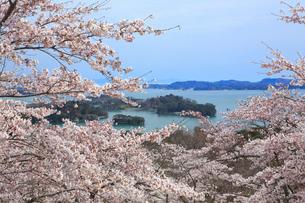 桜咲く松島 宮城県の写真素材 [FYI03143303]