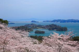 桜咲く松島 宮城県の写真素材 [FYI03143312]