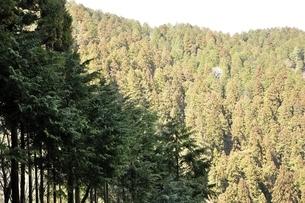 杉林の写真素材 [FYI03143549]