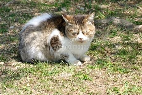 三毛猫の写真素材 [FYI03143690]
