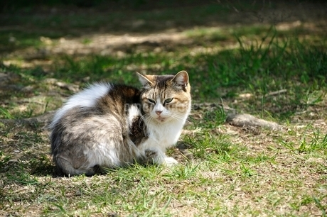 三毛猫の写真素材 [FYI03143693]