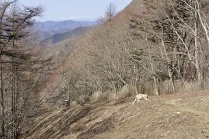 鷹ノ巣山を通る石尾根縦走路の写真素材 [FYI03143713]