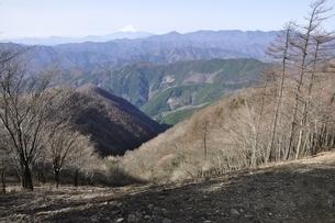 鷹ノ巣山より富士山と大菩薩連嶺を望むの写真素材 [FYI03143714]