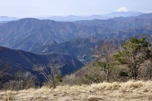 鷹ノ巣山から富士山と三頭山の写真素材 [FYI03143722]