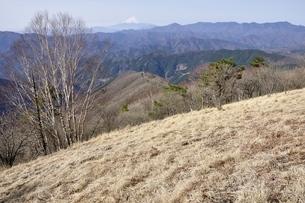 鷹ノ巣山のカヤト原より富士山と大菩薩連嶺の展望の写真素材 [FYI03143723]