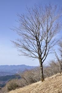 鷹ノ巣山の木立ちの写真素材 [FYI03143781]