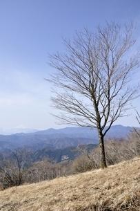 石尾根縦走路の木立ちと富士山遠望の写真素材 [FYI03143783]