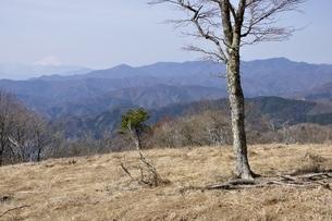 鷹ノ巣山の木立ちからの展望 富士山と大菩薩連嶺の写真素材 [FYI03143785]