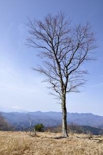 早春の木立ちと大菩薩連嶺と富士山の写真素材 [FYI03143791]