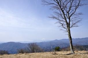 富士山展望と山の木立ちの写真素材 [FYI03143792]