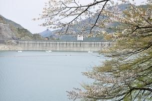 春の奥多摩湖の写真素材 [FYI03143850]