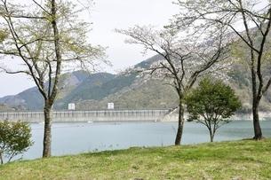 桜咲く奥多摩湖 小河内ダムの写真素材 [FYI03143853]