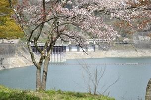 桜咲く奥多摩湖 小河内ダムの写真素材 [FYI03143854]