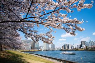 満開の桜並木と遊覧船走る隅田川の写真素材 [FYI03143883]