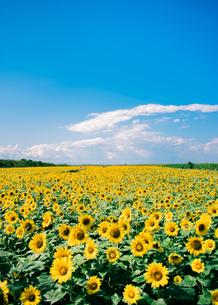 Summer colorの写真素材 [FYI03144014]