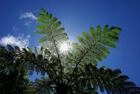 母島のマルハチの木の写真素材 [FYI03144134]