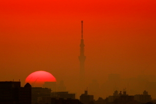朝日とスカイツリーの写真素材 [FYI03144476]