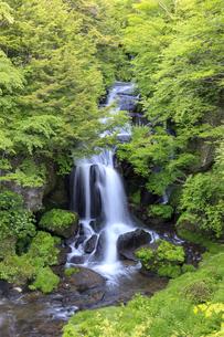 初夏の竜頭ノ滝の写真素材 [FYI03144492]