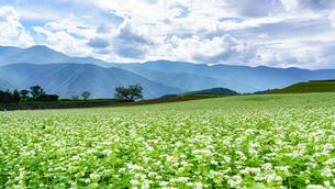 蕎麦の花と甲斐駒ケ岳の写真素材 [FYI03144664]