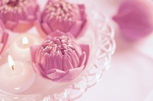 ハスの花の写真素材 [FYI03144688]