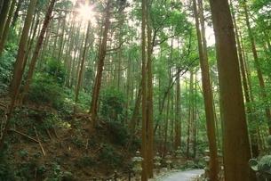 天の岩戸 参道の写真素材 [FYI03145082]