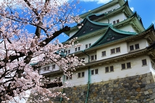 名古屋城と桜の写真素材 [FYI03145182]