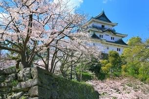 和歌山城と桜の写真素材 [FYI03145197]