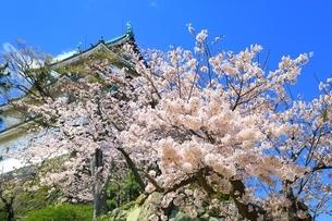 和歌山城と桜の写真素材 [FYI03145198]