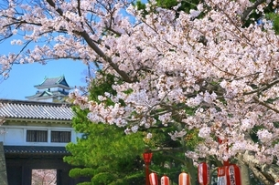 和歌山城と桜の写真素材 [FYI03145199]