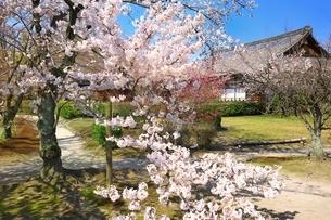 桜咲く勧修寺の写真素材 [FYI03145230]
