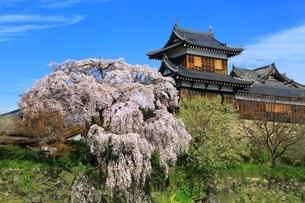 桜咲く郡山城の写真素材 [FYI03145232]