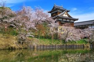 桜咲く郡山城の写真素材 [FYI03145234]