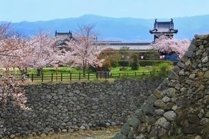 桜咲く郡山城の写真素材 [FYI03145236]