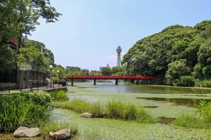 大阪・天王寺公園から通天閣を望むの写真素材 [FYI03145353]