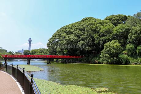 夏の天王寺公園の写真素材 [FYI03145356]