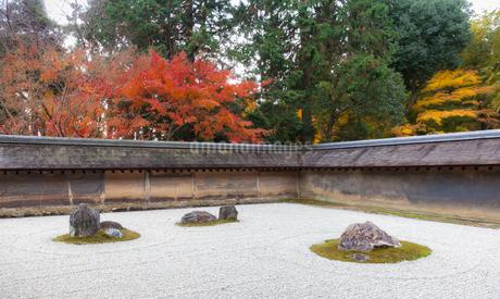 秋の龍安寺の庭園の写真素材 [FYI03145423]