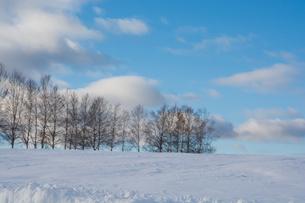 雪の丘とシラカバ並木 美瑛町の写真素材 [FYI03145621]