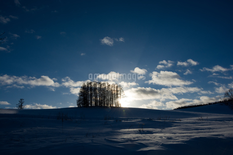 夕暮れの雪の丘のカラマツ林 美瑛町の写真素材 [FYI03145623]
