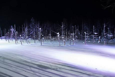 ライトアップされた冬の青い池 美瑛町の写真素材 [FYI03145641]