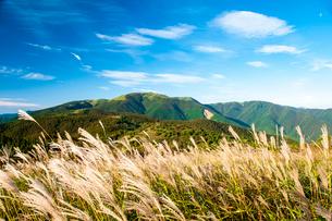 ススキ輝く高ボッチ高原より鉢伏山方面と秋の空の写真素材 [FYI03146293]
