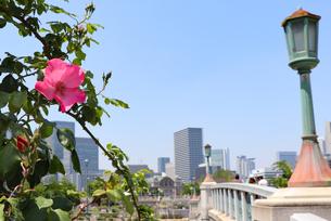 大阪・中之島公園の写真素材 [FYI03146785]