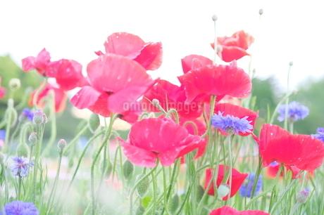 花畑の写真素材 [FYI03146850]