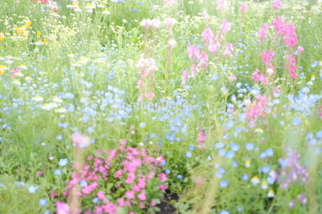 花畑 2の写真素材 [FYI03146851]