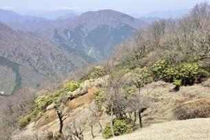 アセビ咲く蛭ヶ岳稜線と大室山の写真素材 [FYI03147013]