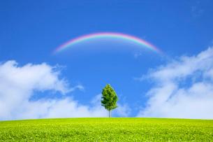 青空と木に虹の写真素材 [FYI03147162]
