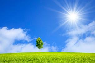 草原と青空に太陽の写真素材 [FYI03147163]