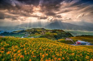 六十石山のワスレグサの写真素材 [FYI03147281]