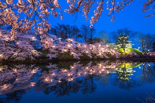 ライトアップされた高田公園の桜の写真素材 [FYI03147285]