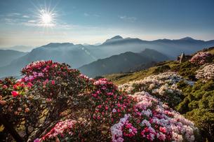 合歓山に咲くツツジの写真素材 [FYI03147302]