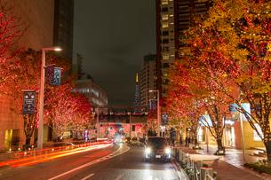 六本木けやき坂の夜景の写真素材 [FYI03147379]
